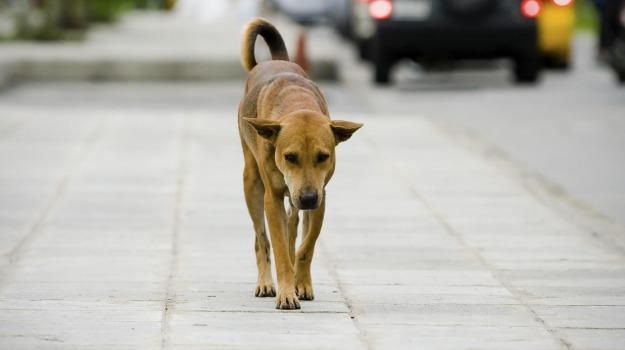 Manifestazione d\'interesse CIG ZBF2AA1A0F - Servizio ricovero cani randagi