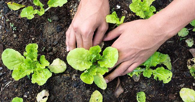 Vuoi un orto da coltivare? Avviso esplorativo per la realizzazione di orti sociali
